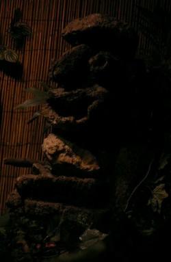 Tiki at Tonga Hut in North Hollywood
