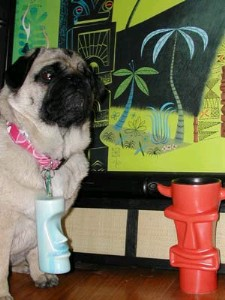 Tiki the pug loves his Munktiki