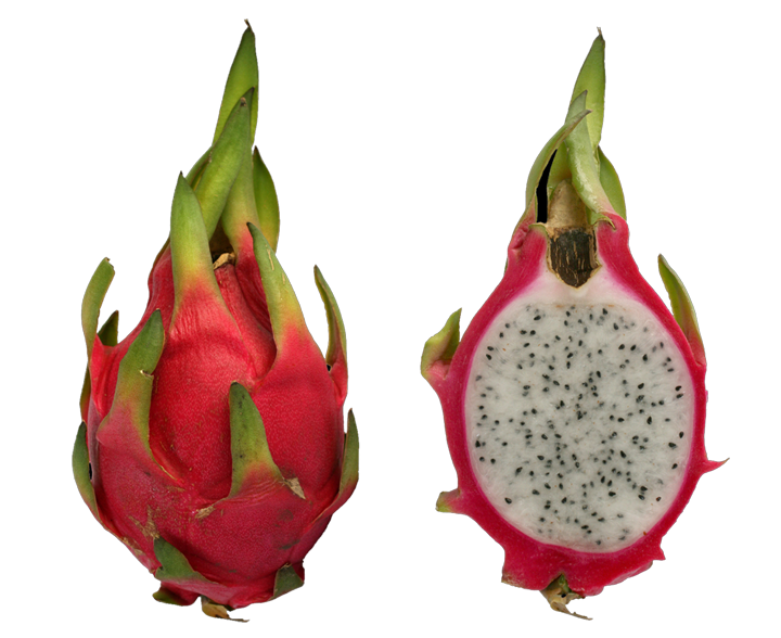 Dragonfruit, photo by SMasters